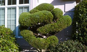 Avail Professional Pruning & Renovations Services in Brier, WA